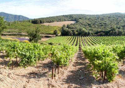 Panorama serre des vignes vignes