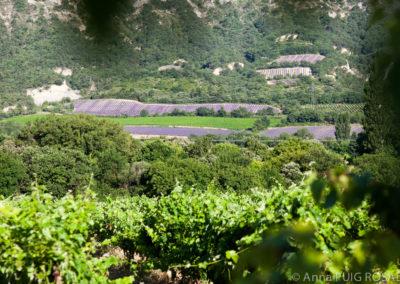 Serre des vignes abricots et paysages-24