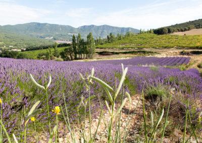 Serre des vignes abricots et paysages-51