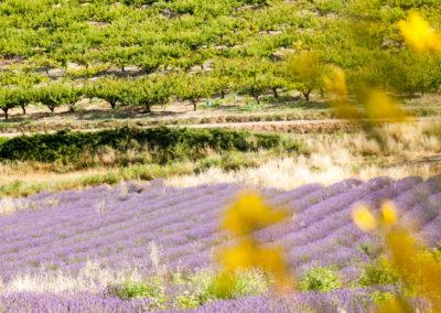 Serre des vignes abricots et paysages-55