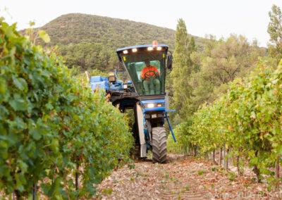 Serre des vignes vendanges machine blanc et cave © Anna Puig Rosado-18