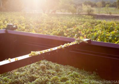 Serre des vignes vendanges machine blanc et cave © Anna Puig Rosado-37
