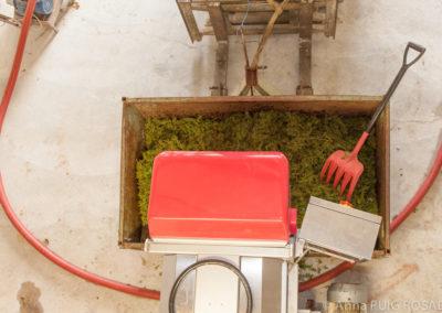 Serre des vignes vendanges machine blanc et cave © Anna Puig Rosado-57