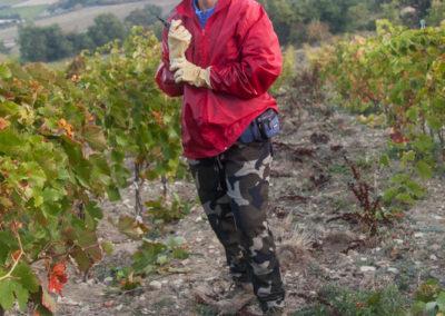 Serre des vignes vendanges manuelles © Anna Puig Rosado-8